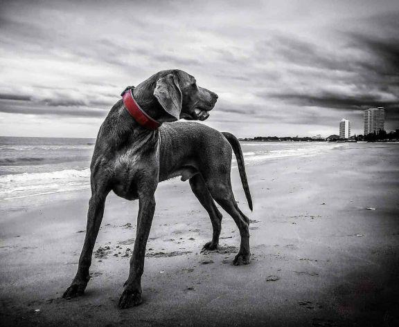 Lo que necesitas saber sobre los seguros para mascotas