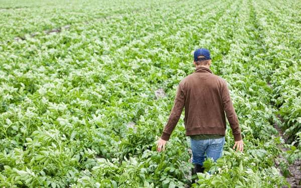 seguro agrario combinado para autonomos