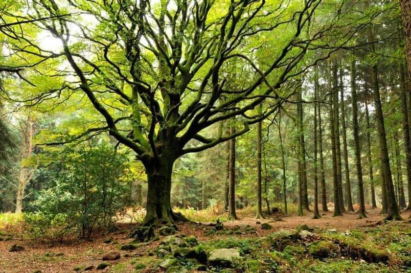 Bosque de Brocéliande
